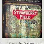 Strawberry Fields … des fraises et un trépied