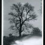 Mon arbre …